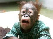 cute-baby-monkey-wallpaper-15148-hd-wallpapers
