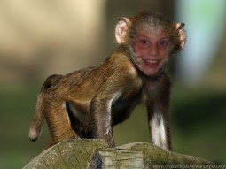KEVINBEALER - ian the monkey